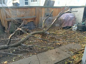 This tree blew 15 ft across the yard and into one Pullman resident's patio roof last Tuesday, November 17, 2015.