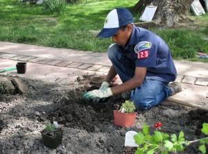 Cub-Scouts-plant-pavilion-flower-beds-2013
