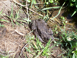 spottedkermit